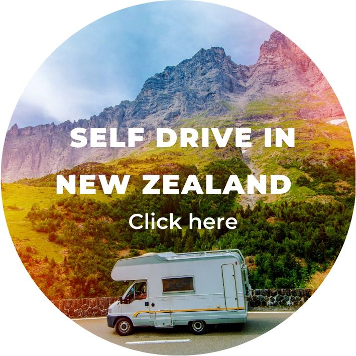 group self drive holiday in new zealand