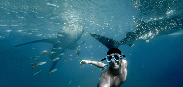 Tours in the Maldives - snorkeling with Whale Sharks